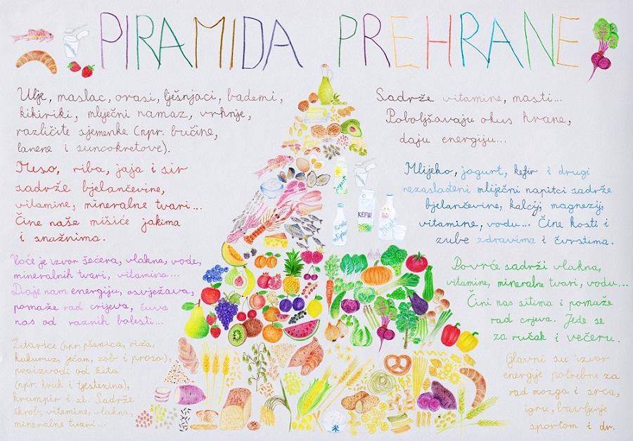 Crtež piramide prehrane